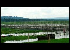 a journey (yellow sunday) Tags: lake green boat bamboo canoe human interest waterscape