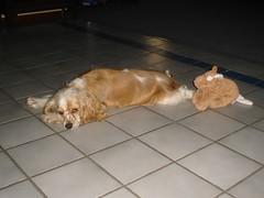 stella on floor