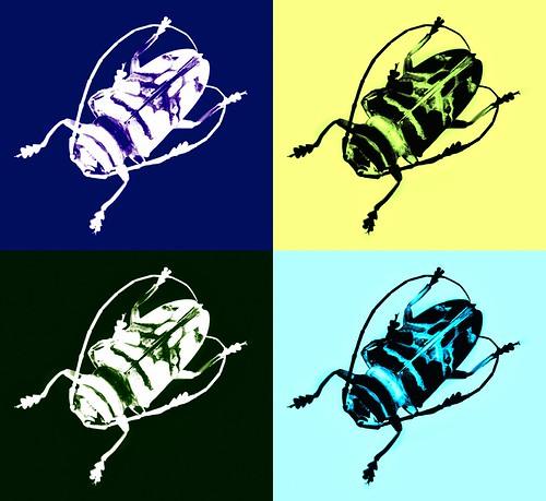 Coleoptera after Warhol