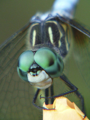 2005_0701CoonDragonfly0105