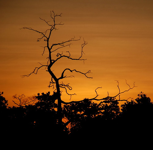 Tree Skeleton at Dusk