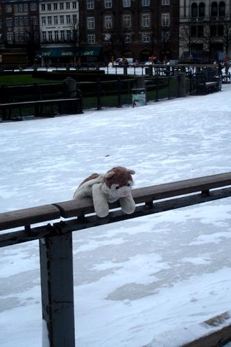 MicioGatto sempre a Copenaghen