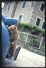 cool cat (Friedel Callies) Tags: film cat slide dia contax 2cv katze kodachrome