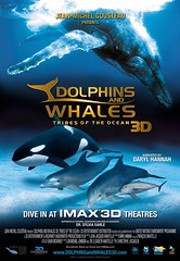dolphins_and_whales_xlg