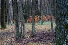 ryoku_de_5354 (ashesmonroe) Tags: wood trees winter wild sky detail nature leaves forest germany deutschland laub herbst wald badenwürttemberg waldboden canonef50mmf18ii hohenlohe badenwrttemberg eckartshausen ilshofen landkreisschwäbischhall landkreisschw¦bischhall
