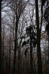 ryoku_de_5651 (ashesmonroe) Tags: wood november trees winter wild sky detail nature leaves forest germany deutschland herbst wald bäume buchwald badenwürttemberg canonef50mmf18ii hohenlohe badenwrttemberg eckartshausen ilshofen landkreisschwäbischhall b¦ume landkreisschw¦bischhall