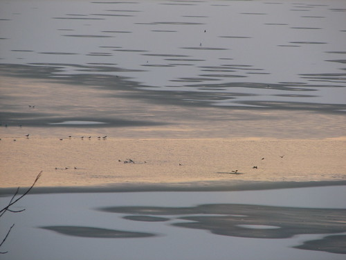 birds in Lake Champlain