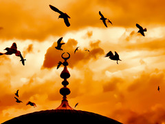 Freedom (E.L.A) Tags: travel sunset sky orange holiday nature colors birds silhouette clouds contrast turkey gold freedom pigeons religion turkiye places istanbul dreaming explore mostinteresting ideas turkish naturesfinest theunforgettablepictures thebestofday gnneniyisi