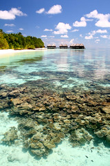 Coral Garden (Dhonfuthu) Tags: sky beach coral clouds lagoon maldives shareef dhonfuthu mohamedshareef