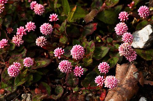 Flowers on the forest floor in Arunachal