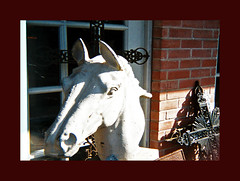 Ansco 50 outtake 984523-R1-20-20_021 (ǝlɐǝq ˙M ʍǝɥʇʇɐW) Tags: horse film march texas cross 110 courtyard boutique outtake 08 ansco hauptstrasse lowfi horseshead filmlives lowfidelity 110film fburg tomhagen ansco50 ididntknowwhoyouwerewith