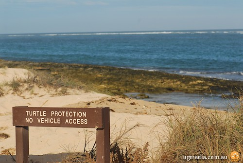 Turtle nesting sign