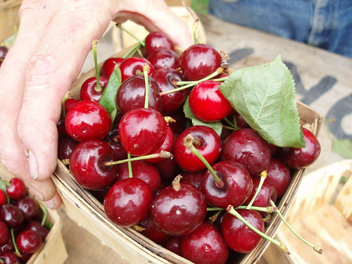Sweet cherries from Tom Tower Farms at Elmwood-Bidwell