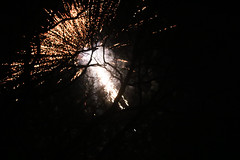 IMG_9705 (felixmackowiak) Tags: sylvester newyear modern silvester fireworks trees night light