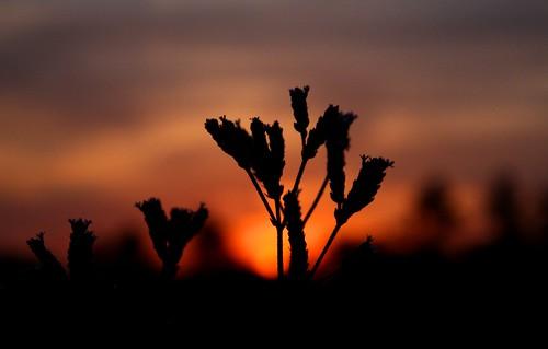 Sunset - 5/9/2009