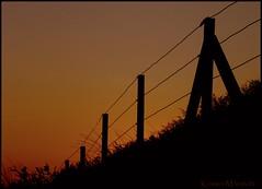 I want to go back (Kirsten M Lentoft) Tags: sunset roses grass fence denmark silhouettes blåvand blaavand congratsonexplore kirstenmlentoft
