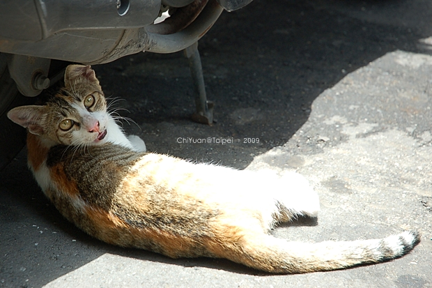 Cat。半身日光浴01.JPG