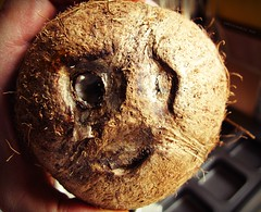 Inanimate Portraits - Face in the Coconut (rafalweb (moved)) Tags: texture face canon mouth eyes coconut expression availablelight powershot g12 inanimateportraits photoscape
