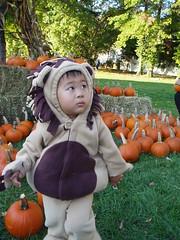 Promenading past the pumpkins