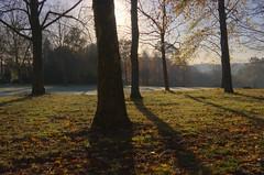 Frosty Morning Birches #1 (Skink74) Tags: uk morning autumn england tree 20d sunrise frost hampshire birch hdr efs1785mmf456isusm hursley eos20d 3xp fdrtools subtlehdr