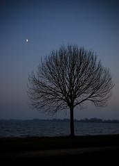 Autumn Try by Night (ace_dave) Tags: blue autumn sea sky moon lake cold tree water silhouette night long exposure tripod vignetting reeuwijk plassen reeuwijkse