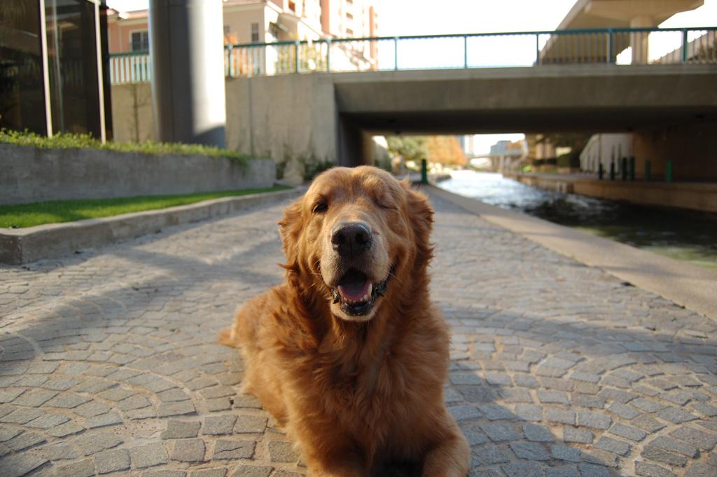 superdog_canal