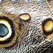 Estos ojos engañan lagartijas