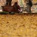 落ち葉のカーペット