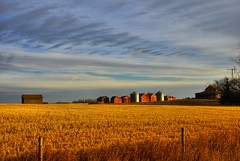 Down on the Alberta Farm (A guy with A camera) Tags: autumn canada nature field rural nikon scenery farm alberta crop farmer prairie agriculture hdr farmstead coutry d80 mywinners platinumphoto flickrplatinum theunforgettablepictures