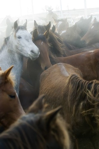 gathering mares 288