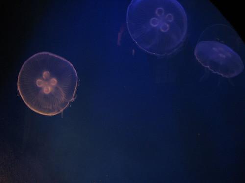 VA Aquarium - JellyFish