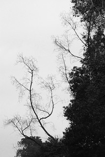 Leafless in spring