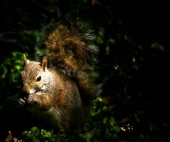 Sunshine On My Shoulder.... (mightyquinninwky) Tags: squirrel 5 kentucky lexingtonkentucky award urbanwildlife frontyard invite chevychase fontaineroad chevychasearea fayettecountykentucky centralkentucky mywinners abigfave platinumphoto thebluegrassstate bestofformyspacestation