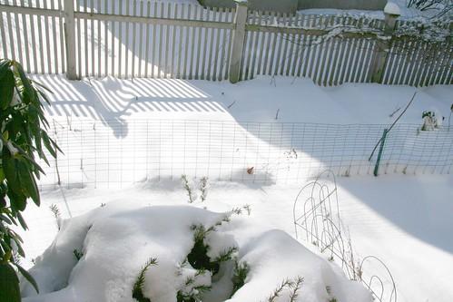 snow beds