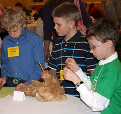 Junior boys answer questions about wool samples.