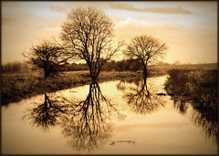 3 trees at honeystreet (lovestruck.) Tags: trees 3 reflection water sepia countryside canal wiltshire kennetandavoncanal bigmomma honeystreet cy2 challengeyouwinner pentaxk10d thechallengefactory fotocompetition fotocompetitionbronze