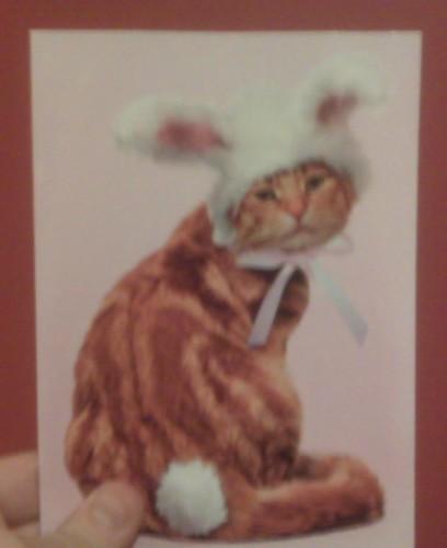 I am a sad cat wearing bunny ears.