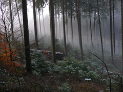 April morning (rolfspicture) Tags: trees nature fog germany landscape forrest april impressedbeauty superbmasterpiece diamondclassphotographer flickrdiamond