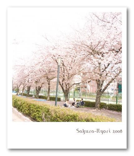 R0013691 : Sakura-Hiyori2008