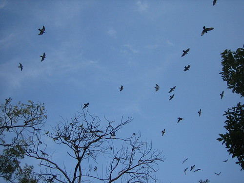 Parrots own the skies