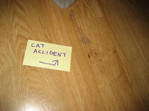 CAT ACCIDENT ->