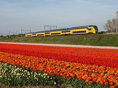 Vogelenzang, April 26, 2008 (cklx) Tags: flowers red holland netherlands spring tulips trains commutertrain bulbflowers bollenstreek virm vogelenzang