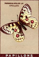 papill 13