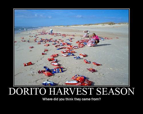 Dorito-Harvest-Season