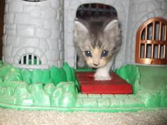 Alex (gnathalie2) Tags: orange baby cute kittens kittenmagazine kissablekat