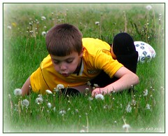 An exciting soccer game (lorainedicerbo) Tags: boy game grass weeds child michigan soccer blow dandelion seeds exciting loraine ayso eastpointe orbored dicerbo region52 lorainedicerbo
