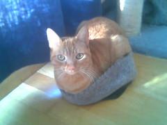Phoebe en su gorro. (Patataasada) Tags: pet cats hat animal animals cat feline chat gorro pussy gatos gato felino animales sombrero catz mascota katz miau minino