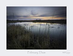 February Thaw (baldwinm16) Tags: february forestpreserve il illinois bog dusk marsh midwest nature naturepreserve season slough sunset wetland natureofthingsphotography