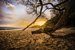 Beached (tristanotierney) Tags: beach bigbeach branches hawaii island islands maui ocean pacific sand sandy sunset sunsets tree trees vacation water