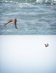 (brianoldham) Tags: ocean summer legs horizon falling gravity change inverted flipped shifted brianoldham